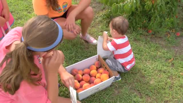 Discover Oklahoma-Wind Drift Orchards-Harrah